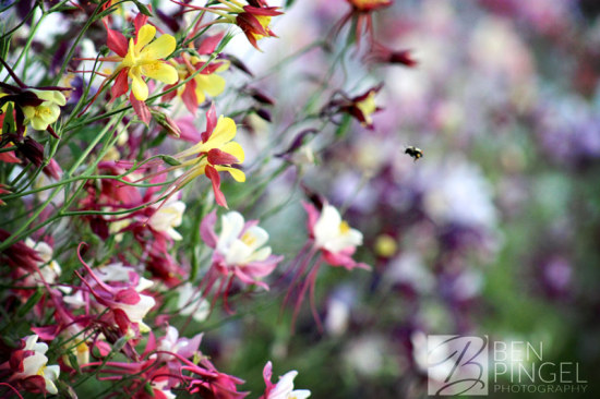 Flowers and the Bee