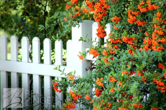 BenPingel_Picket-Fence