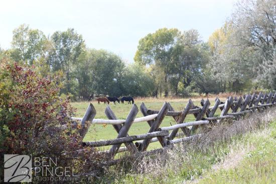BenPingel-Pasture