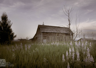 Abandoned cabin in fields with flowers in Bancroft, Idaho